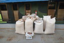 Foto de AM: 73kg de pirarucu ilegal escondidos em sacos de farinha são apreendidos em Uarini
